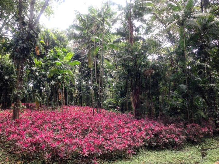Parque Exótica Flora Yaracuy_SilviaDubuc