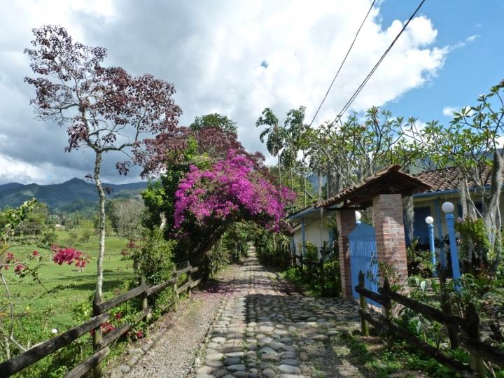 Jardin_Colombia_SilviaDubuc 1