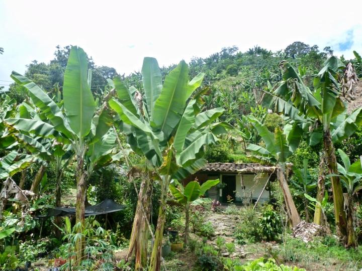 Jardin_Colombia_SilviaDubuc 4